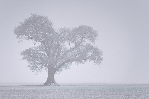 Windyedge Tree: Winter