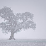 Windyedge Tree: Winter thumbnail
