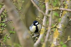 J78A0163 (M0JRA) Tags: birds humber ponds lakes people trees fields walks farms traylers