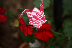 Paper Crane and Pelargonium (Errai 21) Tags: ツルとゼラニューム origami ツル 折り紙  origami 折り鶴 おりがみ papercrane 花 flower 花写真 flowerphoto origamiphoto 花が好き pelargonium ゼラニューム  paper crane