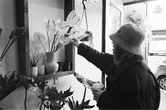 """Flowers/plants"".          #35mm #streetphotography #film #kodak #olympus #olympusxa #blackandwhite #pointandshoot (bnroman94) Tags: 35mm streetphotography film kodak olympus olympusxa blackandwhite pointandshoot"