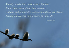Quoting life (PhiloTrek) Tags: life winter summer autumn spring vitality fourseasons lifetime space quotation quote quotes words thought thoughts poem