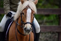 Pferd 01 (Sebastian Ukas) Tags: nikon z6 sigma 150600mm pferd tier reiten