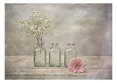Three bottles with Gerbera and Gypsophilia (angeladj1) Tags: stilllife bottles gerbera gypsophilia textures