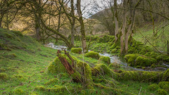 I quite like the colour green. (Ian Emerson (Thanks for all the comments and faves) Tags: stream water lathkilldale peakdistrict derbyshire trees fallen trunk outdoor hiking lovehiking canon6d