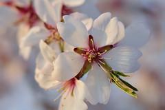 (Idoia -) Tags: flor macro blanco