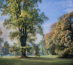 Happy trees (Ingeborg Ruyken) Tags: 2018 autumn october woods berlicum fall flickr herfst ochtend morning wamberg forest oktober natuurfotografie instagram 500pxs shertogenbosch bos