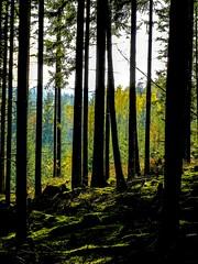 Mushroom woods III (ksvala) Tags: nature woods trees autumn