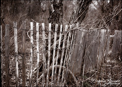Happy Fence Friday... (angelakanner) Tags: canon70d 24mmpancake happyfencefriday fence fencefriday wood makamahnaturepreserve longisland bwcolor
