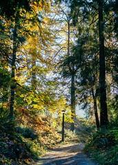 Sunshine Daydream (BlinkOfALens) Tags: portland oregon unitedstatesofamerica us fallcolors autumn trees park