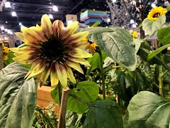 (baccarati) Tags: flowershow phs philadelphiaflowershow flowers convention showcase philly tradeshow philadelphia pennsylvaniaconventioncenter pennsylvania