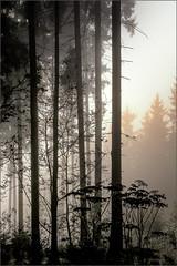 Sunrice (Eva Haertel) Tags: eva haertel natur nature landscape landschaft wald forest woodland sunrice sonnenaufgang licht light sonne sun gegenlicht silhouette monochrom kontur contour grass gras stimmung mood tschechischerepublik czechrepublic czech