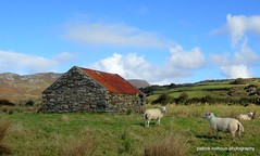 old barn (patrickcolhoun) Tags: sheel animals farm barn abandoned derelict fields landscape inishowen countydonegal ireland donegal