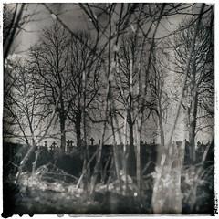 Les arbres renaissent après l'hiver!!! (Des.Nam) Tags: arbres arbre tree cimetière tombe tomb cimetery carré square desnam fuji fujixpro2 takumar pentax manualfocus analogefex texture textured nature paysage noiretblanc virage monochrome mono blackwhite sépia 50mmf14