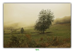 PARC NATUREL REGIONAL DU MORVAN (régisa) Tags: parc naturel régional morvan bourgogne arbre tre mist brume dakotasuite natureinfocusgroup