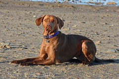 Beach babe (Barry Potter (EdenMedia)) Tags: barrypotter edenmedia nikon d7200 bracken
