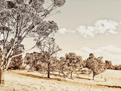 After a stormy night (YAZMDG (16,000 images)) Tags: stormy cloudscapes ruralscapes victoria australia poststorm chillywinds landscapes snapseed editingsoftware