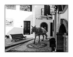 Transport écolo! (francis_bellin) Tags: mars blackanwhite rando espagne streetphoto street chaux netb photoderue banc noiretblanc monochrome mulet villageblanc blanc andalousie rue portage bw 2019 village frigiliana