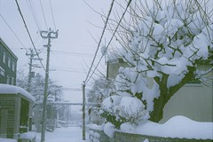 Everything has got white in a day (しまむー) Tags: minolta himatic rokkor 45mm f2 fuji superia venus 400