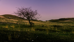 Tree (NickLesta) Tags: hungary magyarorszag spring sunset color colorful twilight violet sky tree alone lonely crop field grass relief crepuscule