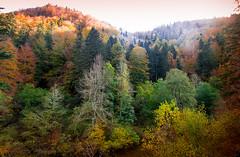 IRATI AUTUMN (juan luis olaeta) Tags: paisajes landscape natura basoa bosque forest photoshop lightroom irati