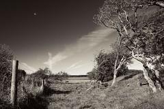 The Field (Alex . Wendes) Tags: field tree trees sepia circularpolarizer d50 nikond50 nikon1855mm 1855mm landscape