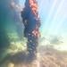 St Leonards Pier Underwater-35