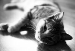 Cat B&W (Engin Süzen) Tags: voigtlander olympus olympusem1markii olympusomdem1markii m43 m43turkiye cat cats catmoments catportrait blackandwhite bright blacknwhite blackwhite bw sb siyahbeyaz mono monochrome