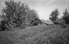 *** (PavelChistyakov) Tags: film 35mm agfa apx negative scan russia village countryside nature landscape bw black white mono monochrome чб canon slr camera buyfilmnotmegapixels filmisnotdeath