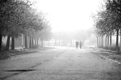 Taking a walk (jaume zamorano) Tags: blackandwhite blancoynegro blackwhite blackandwhitephotography blackandwhitephoto bw boira brouillard catalunya d5500 fog foggy lleida monochrome monocromo mist nikon noiretblanc nikonistas niebla pov people road street streetphotography streetphoto streetphotoblackandwhite streetphotograph tree urban urbana