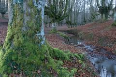 haya (canalesjacinto58) Tags: arbol three forest river water paisaje landscape paisvasco