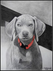 Bailey - Pencil Drawing by STEVEN CHATEAUNEUF (snc145) Tags: animal art drawing shading pencil detail pencildrawing bailey stevenchateauneuf 2018 blackwhite monochrome flickrunitedaward dogportrait simplysuperb fineart