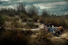 Prima della pioggia (davidevolpi (thanks for 1,5 million more views)) Tags: spiaggia biciclette vento