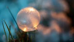 Sphere (fotobagaluten.de) Tags: sphere sphäre frozen gefroren bubble blase seifenblase soapbubble frost winter macro makro