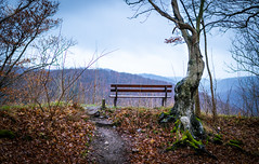 A View to die for (dlerps) Tags: amount centralgermany de daniellerps eu europa europe fullframe germany harz lerps lowersaxony mitteldeutschland niedersachsen norddeutschland northerngermany sony sonyalpha sonyalpha99ii sonyalphaa99ii lerpsphotography bench view seat tree panoramic mountains nature fall autumn forest woods leaves badharzburg groserburgberg