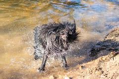 20190215-IMG_8702 (Alderbabbsack) Tags: struppi hund