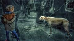 Atracción  mutua. (Marina Is) Tags: niño perro dog atracción mutualattraction littleboy greyhound galgo