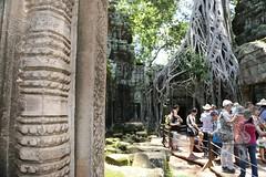 Angkor_Ta Prohm_2014_39