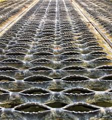 All those mouths to feed (Mr_Pudd) Tags: steeldecking bridge steelfootbridge steel scotland westhighlandway johnmuirway