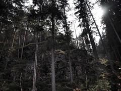 bohemian forrest (paddy_bb) Tags: olympusomd paddybb mft microfourthirds wwwpatblogde 2019 czechrepublic tschechien bohemianforrest wald travel tree wood velhartice