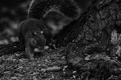 (WB.Photography) Tags: squirrel pentax tamron ngc nat geo explore