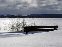 Winter on the Volga / Зима на Волге (dmilokt) Tags: природа nature пейзаж landscape лес forest дерево tree снег snow dmilokt река river nikon d850