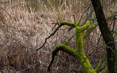 Mossy tree (bdg-photography) Tags: trees tree water lake forest nature pond mossy moss log naturephotography natur