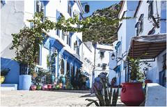 487- EXPLOSIÓN DE COLORES EN XAUEN - MARRUECOS - (--MARCO POLO--) Tags: marruecos exotismo calles ciudades rincones