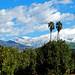 Oranges, Palms and Snow, Redlands, CA 2-19