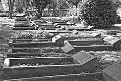 QUAKER BURIAL GROUND  Monochrome (brianarchie65) Tags: quaker quakers hull graves grave trees brianarchie65 geotagged generalcemetery quakercemeteryhull kingstonuponhull cityofculture springbankwest blackandwhite blackandwhitephotos blackandwhitephoto blackandwhitephotography blackwhite123 blackwhiterealms unlimitedphotos ngc flickrunofficial flickr flickruk flickrcentral flickrinternational ukflickr