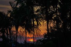 sunset (Guy Goetzinger) Tags: sonnenunteraufgang szenen goetzinger nikon 2019 d500 bali indonesia forest landscape sunset palme exotic asia