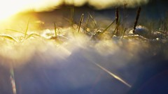 Light abstract (Stefano Rugolo) Tags: stefanorugolo pentax k5 pentaxk5 smcpentaxm50mmf17 kmount ricohimaging light abstract bokeh angle grass dew frost backlight manualfocuslens manualfocus manual vintagelens hälsingland sweden sverige