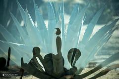 Double Exposure Bird Cactus K75_7847 (kathypaynter.com) Tags: double doubleexposure incameradoubleexposure incamera cactus cacti arizonacactus birdinacactus