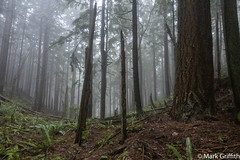 The Middle Between (Mark Griffith) Tags: issaquah issaquahalps running sonyrx100va squakmountain trailrunning